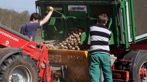 Kartoffelernte Hof Mäsker, Haren