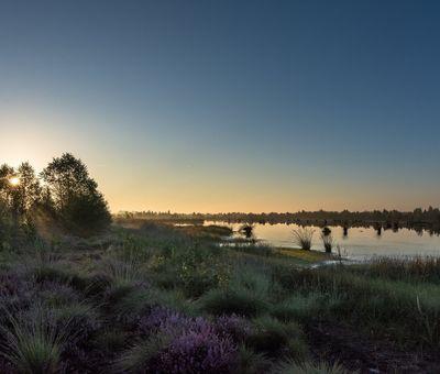 Moorlandschaft mit Heide