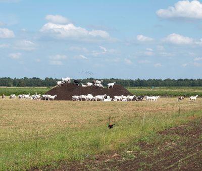 Fehnland Ziegenkäserei